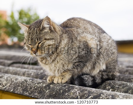 Cat with closed eyes. The cat is on a roof - stock photo