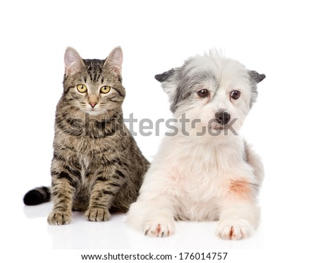 cat with dog looking at camera together. isolated on white background - stock photo