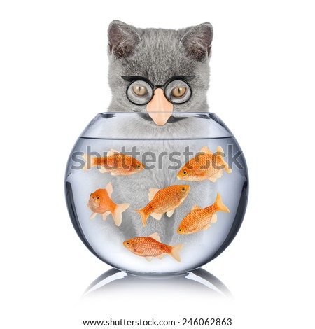 cat with false nose looking into fish bowl - stock photo