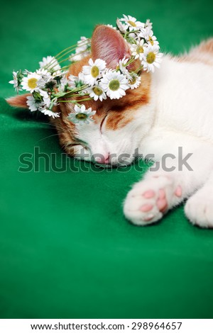 cat with floral wreath - stock photo
