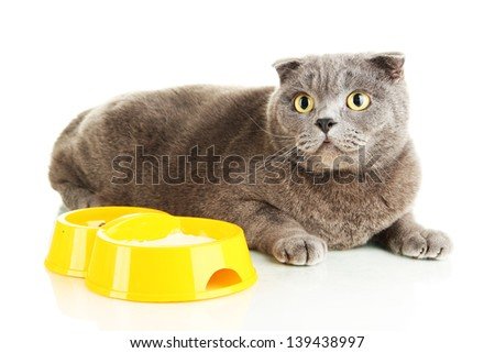 Cat with food isolated on white - stock photo