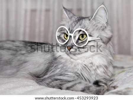Cat with glasses - stock photo