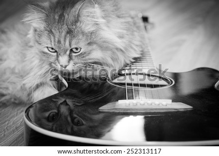 Cat with guitar - stock photo