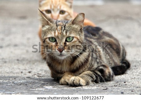 Cat with his friend - stock photo