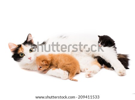 cat with kittens on a white background - stock photo