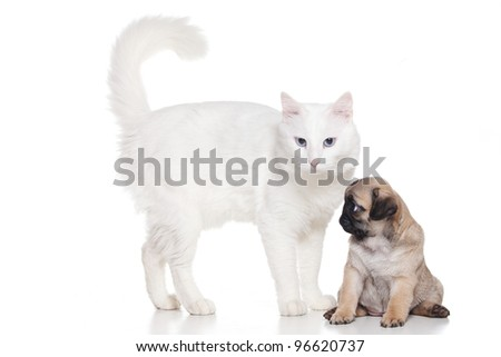 Cat with pug puppy on white - stock photo