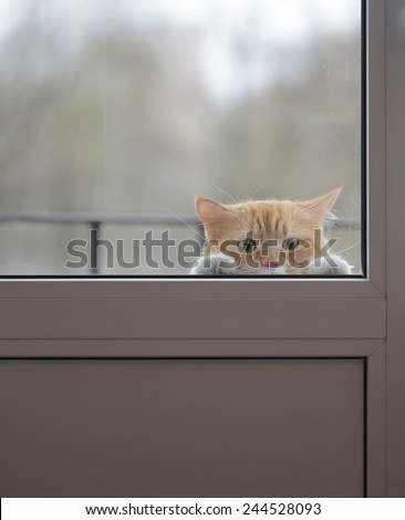 Cat with sad eyes behind the glass door - stock photo