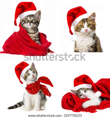 cat with santa cap - stock photo