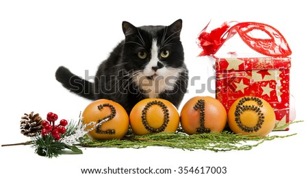 Cat with the new 2016 - stock photo