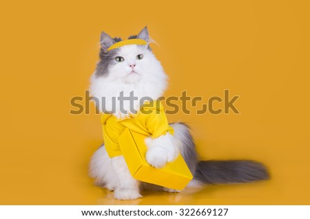 cat works as a courier on a yellow isolated background - stock photo