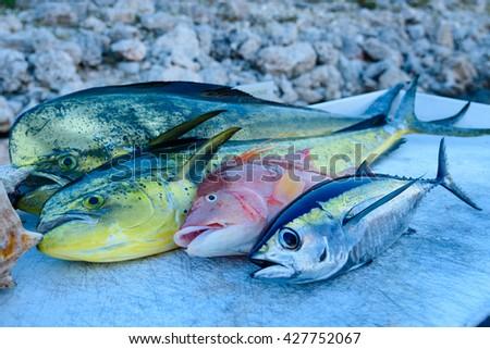 Catch of the day, Mahi mahi, Tuna, Hog fish - stock photo