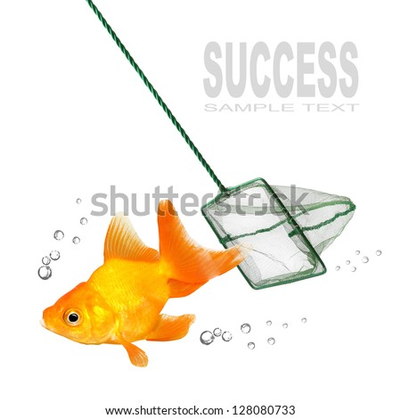 Catching of the goldfish. Success concept. - stock photo