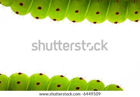 Caterpillar border - stock photo
