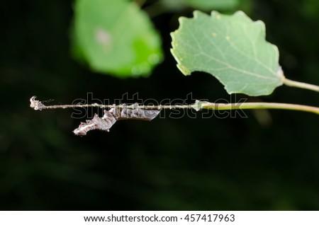 caterpillar upside down - stock photo