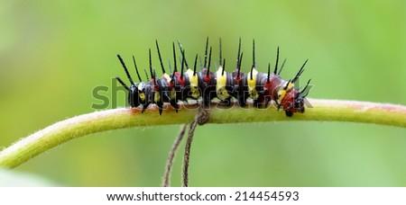 Caterpillars on plant - stock photo