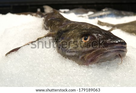 Catfish on ice  - stock photo