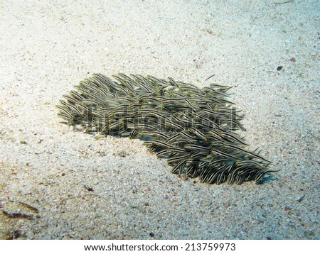 Catfish school - heart on sand - stock photo