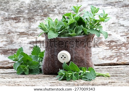 catnip in the small bag - stock photo