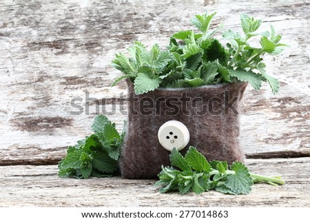 catnip into felt bag - stock photo