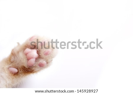 cats - stock photo