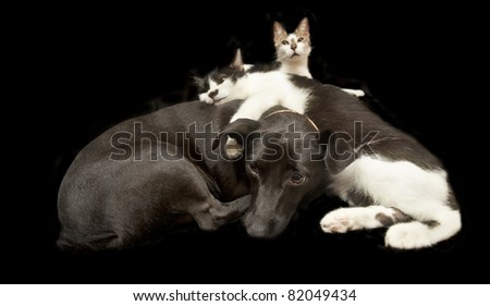 cats and dog - stock photo