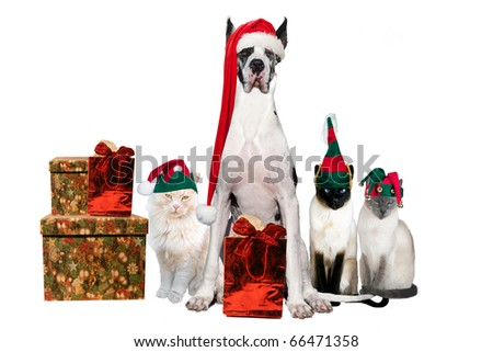 Cats and dog with with Christmas hats and gifts on a white background - stock photo