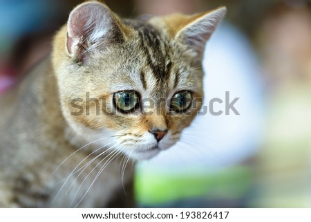 Cats and dogs: young Bengal cat, close-up portrait, selective focus, natural blurred background - stock photo