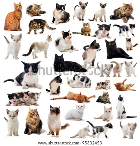 cats and kitten on a white background - stock photo