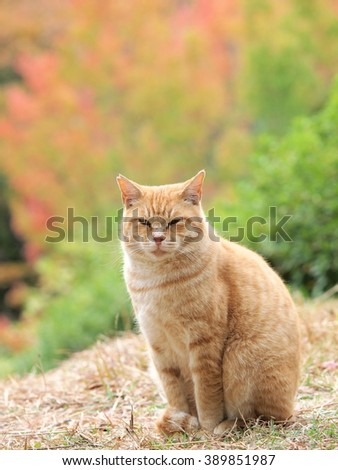 Cats autumn leaves to background - stock photo