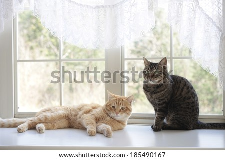 Cats by the window - stock photo