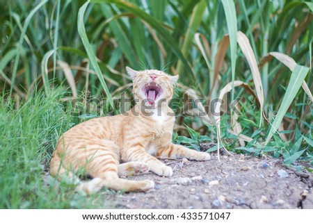 Cats in the wild - stock photo