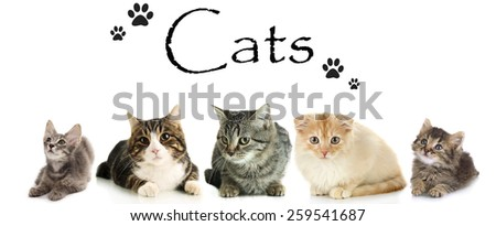 Cats isolated on white - stock photo