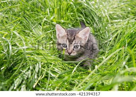 Cats little on nature background - stock photo