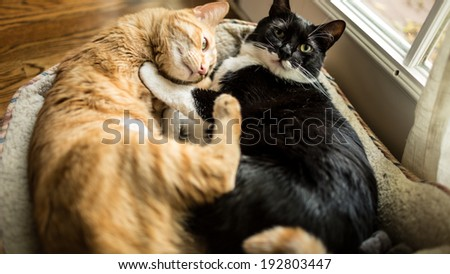 Cats Napping Together - stock photo