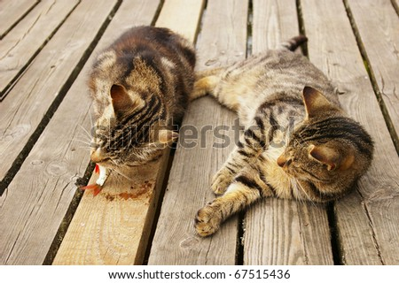 cats on a pier - stock photo