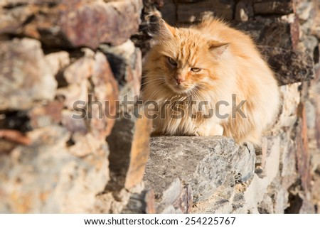 Cats sleeping at window outdoor during a sunny day - stock photo