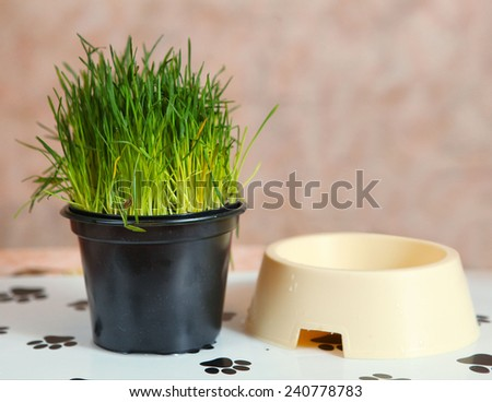 cats things  food and pot grass - stock photo