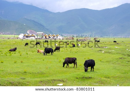 Cattle and sheep - stock photo