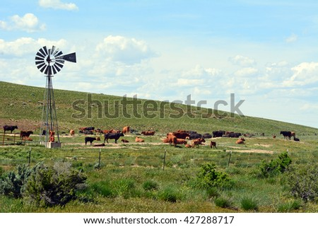 Cattle gathering at water hole powered by windmill. - stock photo
