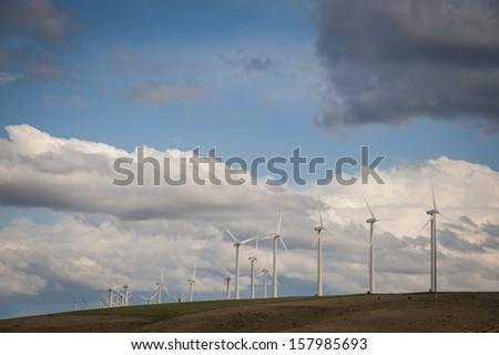 Cattle grazing beneath wind turbines in Washington state - stock photo