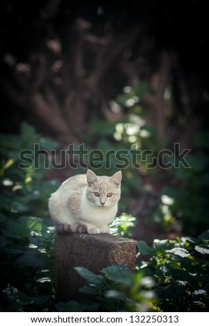 Cautious white cat in the forest - stock photo