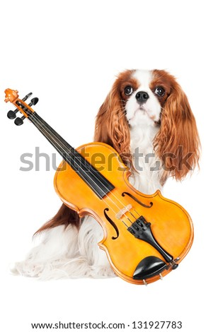 cavalier king charles spaniel dog with violin - stock photo
