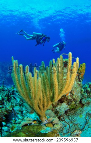 Cayman Corals with silhouette Divers, Grand Cayman - stock photo