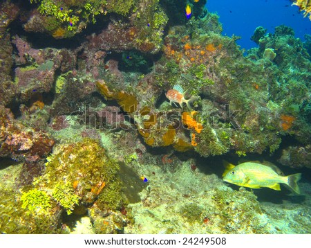Cayman Island Reef Scene with Fish and Copy Space - stock photo