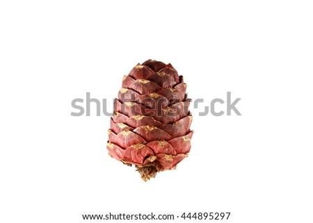 cedar pine cone isolated on white background - stock photo