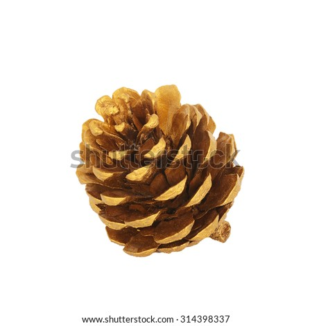 cedar pine cone isolated on white background. This has clipping path.  - stock photo