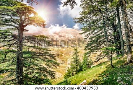 Cedars of Lebanon, beautiful ancient cedar tree forest in the mountains, amazing Lebanese nature, peaceful landscape of a National Park Reserve, Bsharre village, North of Lebanon  - stock photo