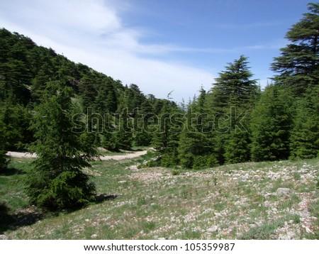Cedars reserve, Shouf Lebanon - stock photo