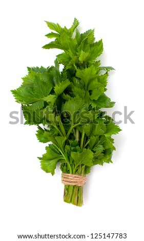celery leafs over white - stock photo