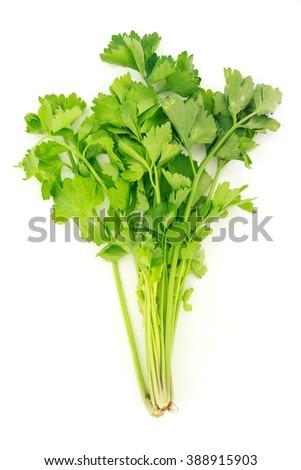 celery vegetable organic food healthy nature - stock photo